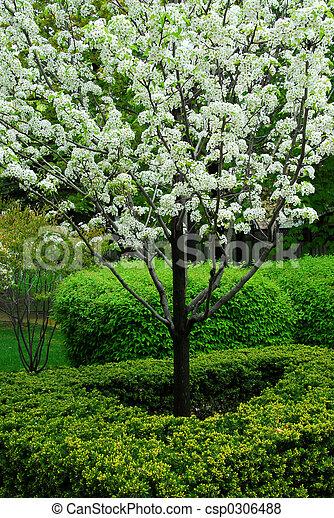 Blooming tree - csp0306488
