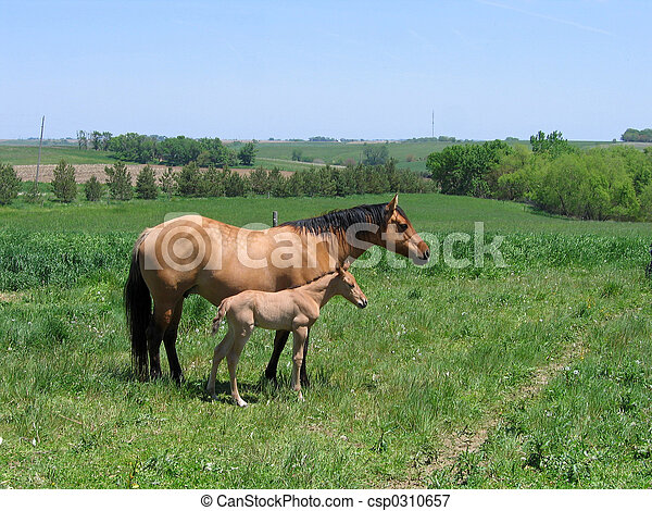 Mare and Foal - csp0310657