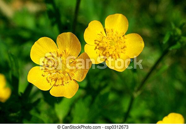 Summer flower, buttercup, spearwort