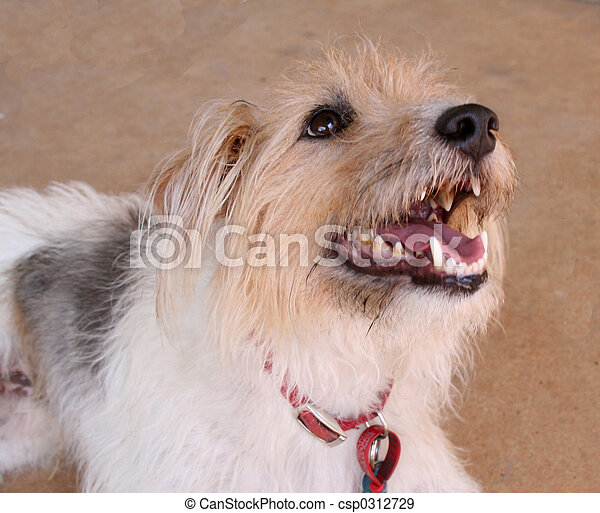 Furry dog with his mouth open