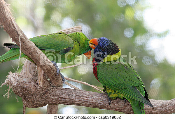 Parrots Grooming Eachother - csp0319052