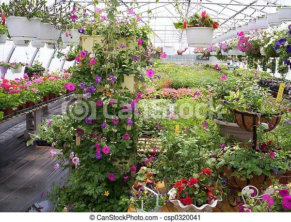 Stock fotografie van planten bloemen broeikas broeikas for Plantas para invernadero