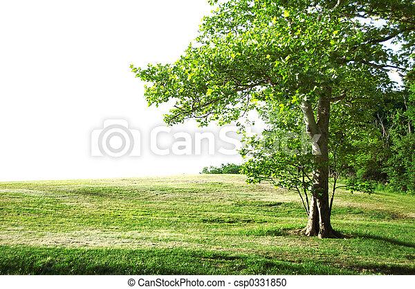 孤獨, 樹 - csp0331850
