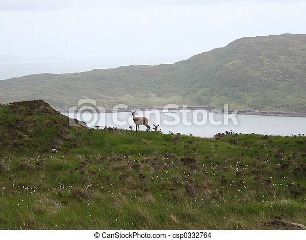 isle of skye wildlife - csp0332764