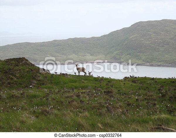 isle of skye wildlife - csp0332764