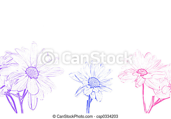 line art  pictures  graphic  graphics  drawing  drawings  artworkLeucanthemum Vulgare Drawing