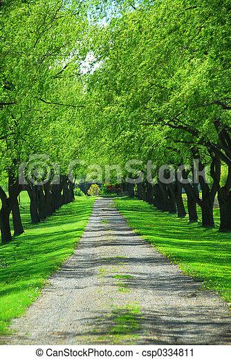綠色, 車道, 樹 - csp0334811