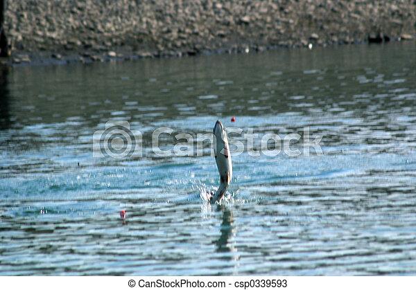 Salmon Fishing - csp0339593