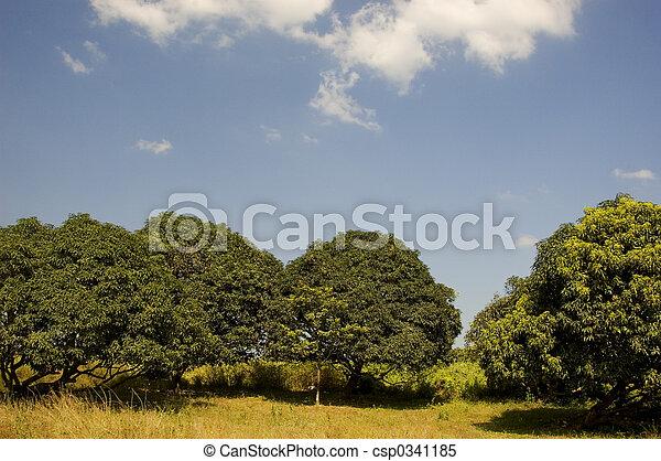 Mango Orchard - csp0341185