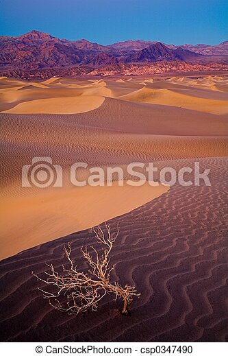 Death Valley Dunes - csp0347490