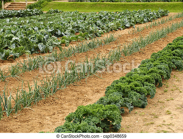 Vegetable garden - csp0348659