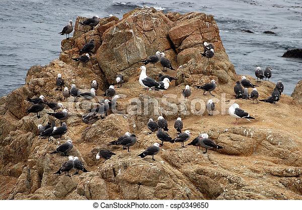Seagull Nursery - csp0349650