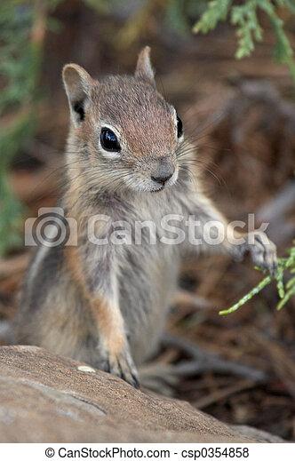 Curious Chipmunk - csp0354858