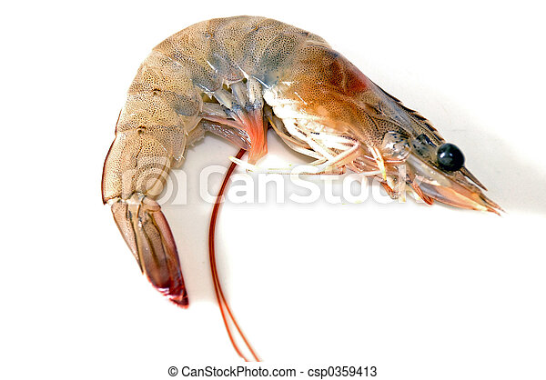Fresh Shrimp - csp0359413