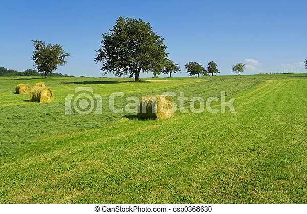 Field with hay rolls - csp0368630