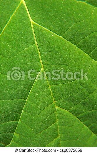 Vein of the leaf - csp0372656