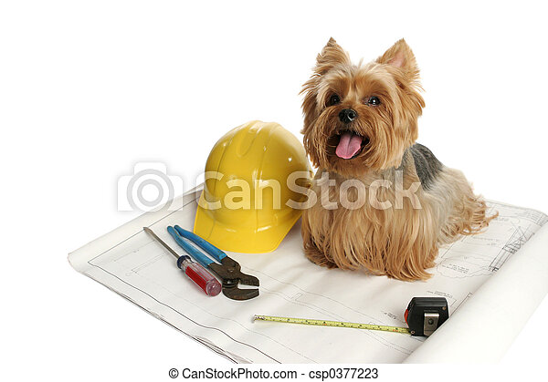 Construction Dog - csp0377223