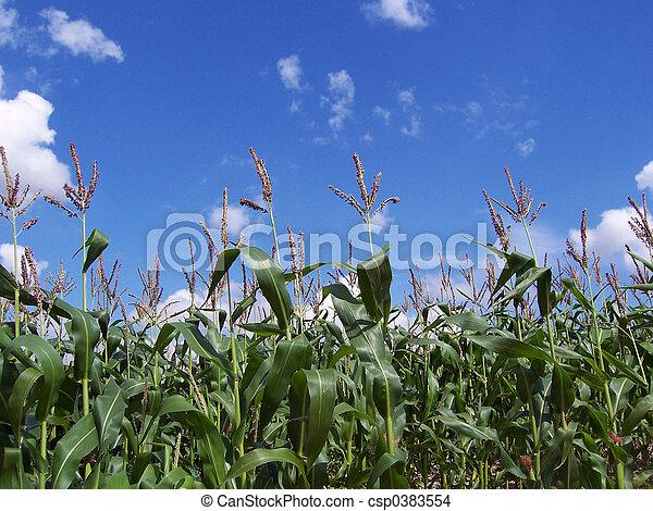 Crop - csp0383554