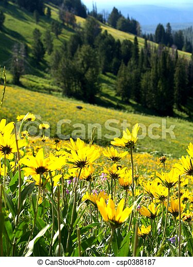 Hillside Flowers - csp0388187