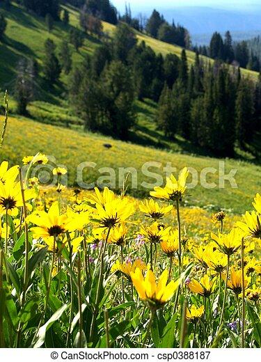 Hillside Flowers - csp0388187