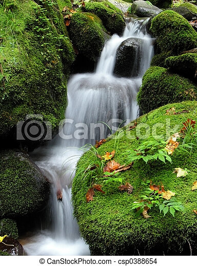 cascada, bosque - csp0388654