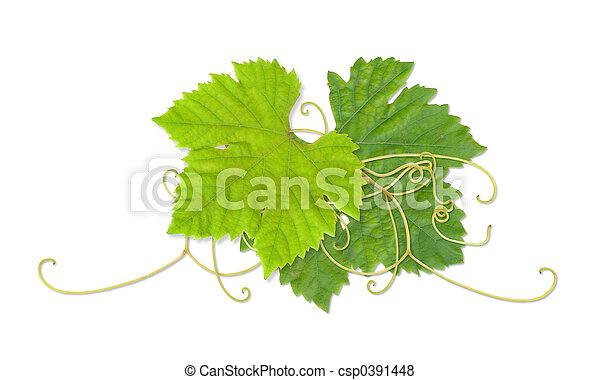 Grape leaves 03 - csp0391448