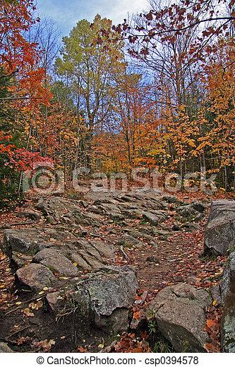 Fall colors - csp0394578
