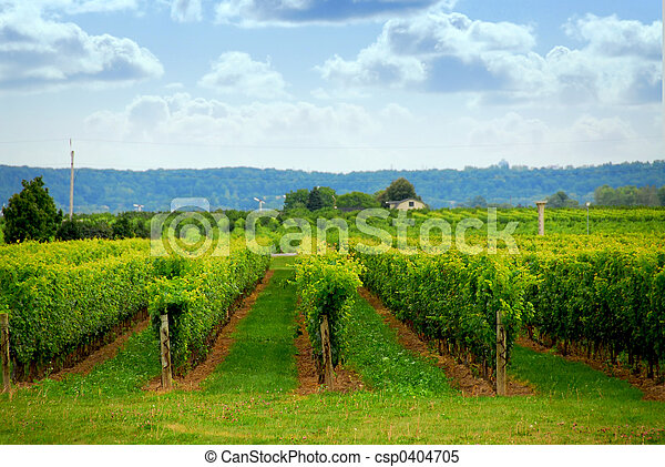 Vineyard - csp0404705