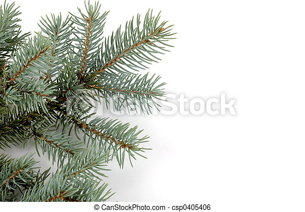 Blue Spruce Bough - csp0405406