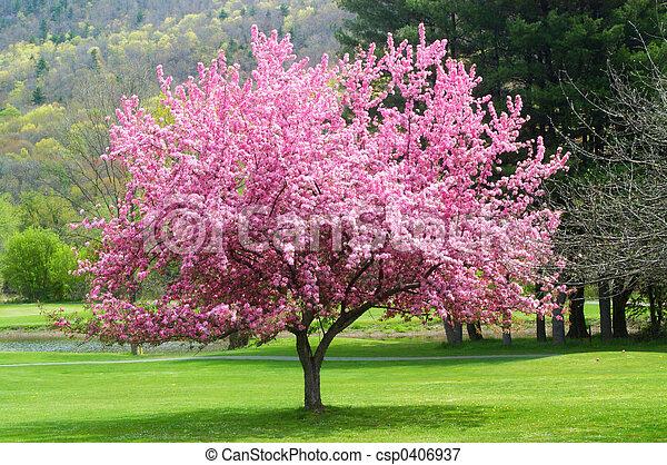 image de rose fleurir arbre joli rose fleurir arbre dans csp0406937 recherchez des. Black Bedroom Furniture Sets. Home Design Ideas