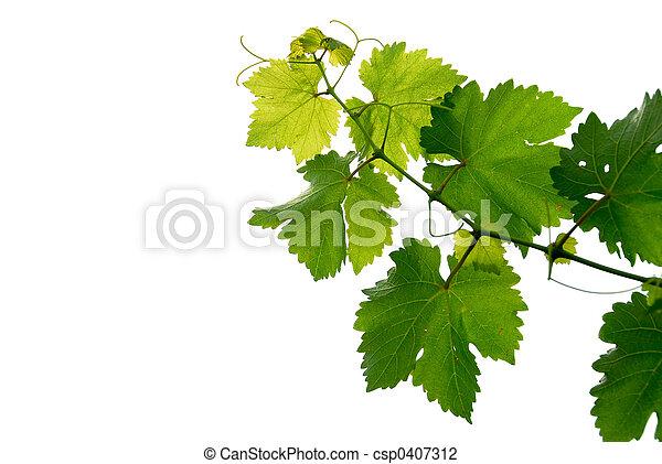Grape vine - csp0407312
