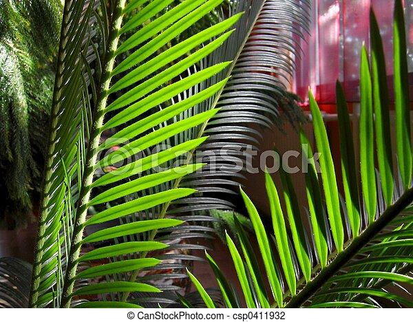 binnen, planten - csp0411932