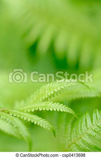 fern leaf - csp0413698