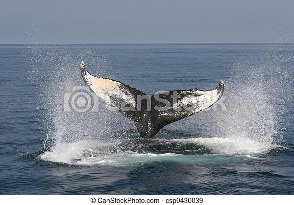 Whale Watching - csp0430039
