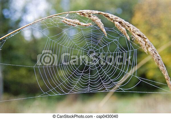 spider web 7103