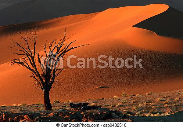 Tree and dune - csp0432510