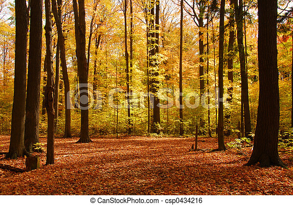 forêt, paysage, Automne - csp0434216