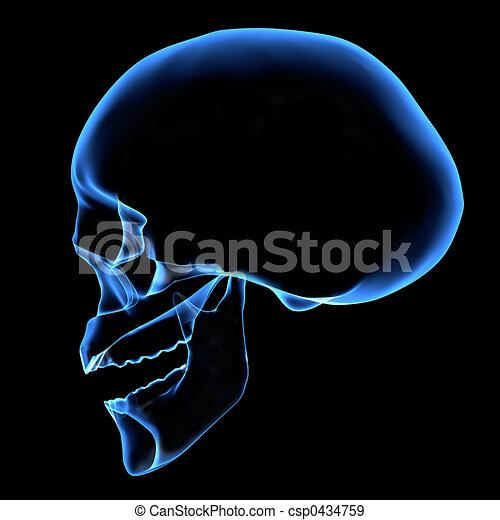 HUMAN SKULL - csp0434759