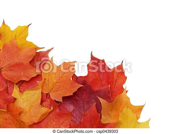 Blätter, Herbst - csp0439303