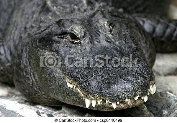 Crocodile #1