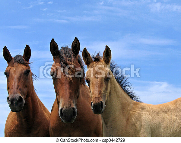 Three quarter horses - csp0442729