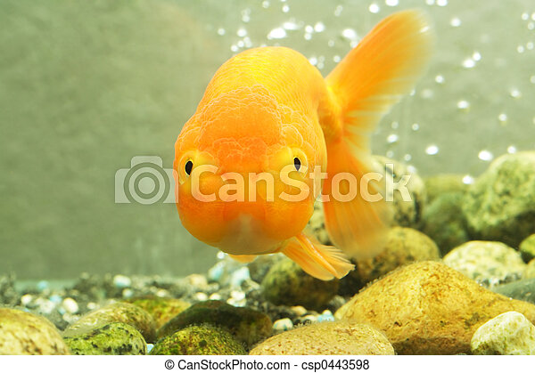 Images de lion t te poisson rouge a lion t te for Tarif poisson rouge