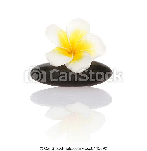 smooth pebble and frangipani flower - csp0445692