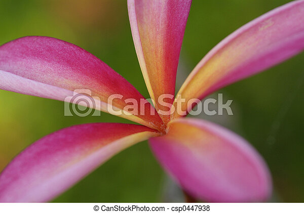 Young leaf of plumeria - csp0447938