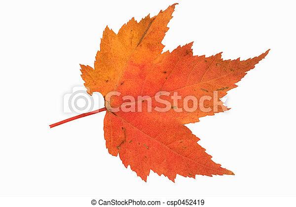 fall maple leaf - csp0452419