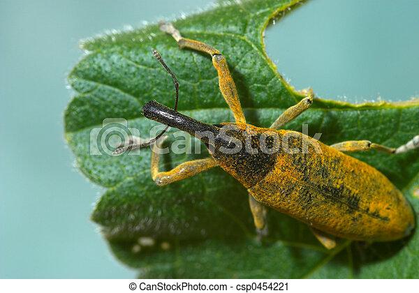 Snout beetle - csp0454221