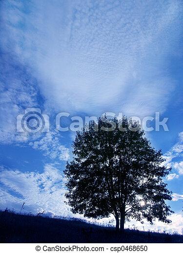 樹 - csp0468650