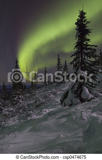 Winter night landscapewith spruce - csp0474675