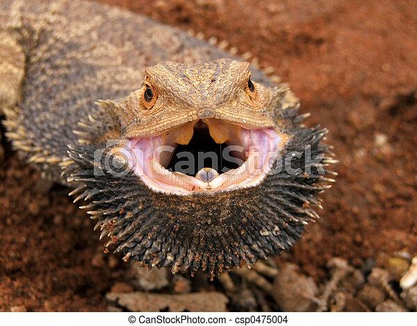 Angry Bearded Dragon - csp0475004