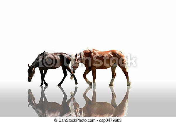Horses - csp0479683